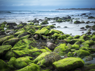 Stones on the beach covered with moss and seaweed at low tide