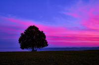 Baum auf Feld gegen Himmel bei Sonnenuntergang