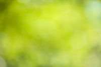 Green blurry bokeh leaves background. Nature environment and design concept.