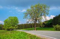 Landschaft mit Straße im Harz