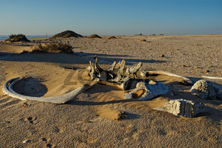 Whale bones, Meob Bay whaling station, Namibia, Africa