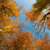 autumn colored tree top in fall season