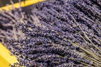 Gelbe Holzkiste mit getrocknetem Lavendel