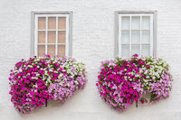 White facade with windows and flowers in flower boxes