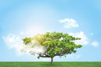 Design of alone tree on meadow and blue sky at sunny summer day