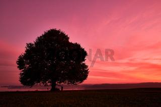 Silhouettenbaum auf dem Feld vor orangem Himmel