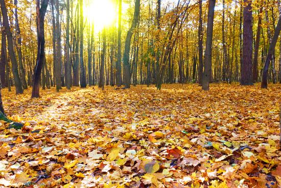 Autumn forest -  landscape