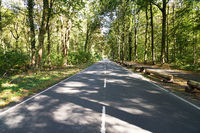 empty two-lane country road through forest