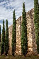Tall Evergreen Trees At Passeig de la Muralla Wall in Girona