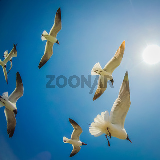 seagulls flying in the sunny sky