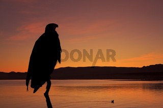The silhouette of the African Fish - Eagle