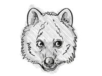 Quokka Endangered Wildlife Cartoon Retro Drawing