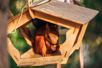 Squirrel eats nuts in the feeder.