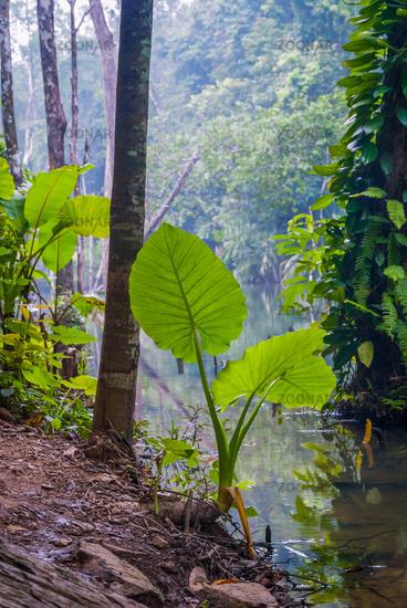 Khlong Chak Lake, Koh Lanta, Thailand
