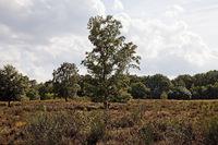SU_Troisdorf_Heide_06.tif