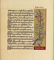Manuscript booknuscript book