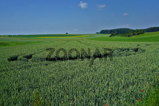 Landschaft auf der Schwäbischen Alb mit Getreidefelder und Wald
