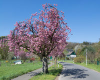 Springtime with Cherry blossom in Bergisches Land near Solingen,North Rhine westphalia,Germany