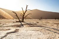 Deadvlei in Namib-Naukluft National Park of Namibia