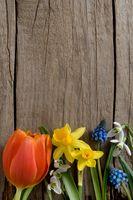 Hintergrund - Altes Holz mit Frühlingsblumen