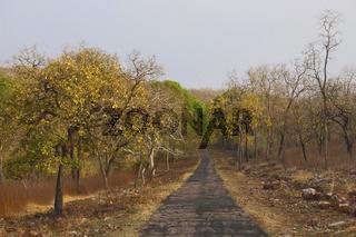 Safari road, Tadoba Tiger Reserve, Maharashtra, India