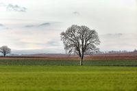 Tree on a field
