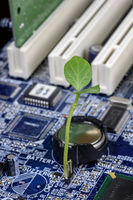 Green Sprout on a blue motherboard, green tech concept