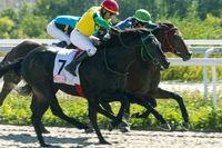 Horse race for the prize of Ogranichitelni.