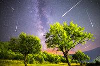 Green trees Milky way night sky falling stars