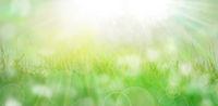 natur gras texturen banner bokeh