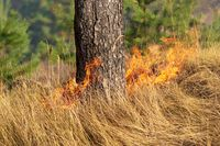 Fire in the forest in the hot summer