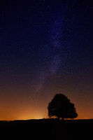 Sternenhimmel mit einzelnem Baum als Silhouette