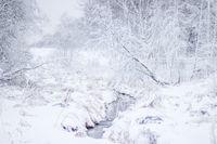 Winter landscape in cloudy weather. Winter Park.