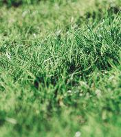 detail of a natural green grass