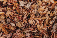 Leaves on the floor with frost in Winter