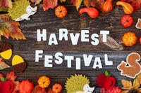 Colorful Autumn Decoration, Text Harvest Festival, Wooden Background