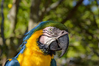 Macaw in the vegetation of the Brazilian rainforest