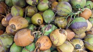 Ein haufen mit mehreren Kokosnüssen in verschiedenen Farben