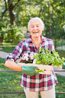 Seniorin im Garten mit Blumen und Basilikum
