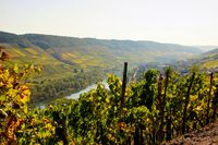 Reil on the Moselle