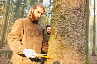 Forstwirt misst Stammdurchmesser von Baum
