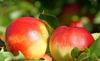 Red Apples 2