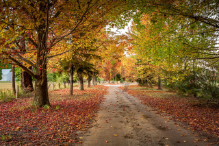 Autumn colours in the tree lined roads