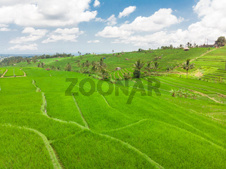 Jatiluwih rice terraces and plantation in Bali, Indonesia, with palm trees and paths.