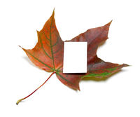 Dark red autumn maple-leaf with white empty price card