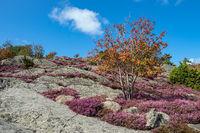 Blick auf die Insel Dyrön in Schweden