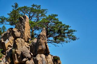 Pine tree and rock cliff , Seoraksan National Park, South Korea