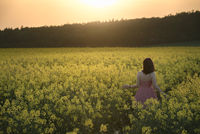 Girl wandering through rapeseed culture at sunset