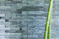 gray brick wall and bamboo