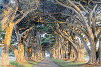 Sunrise over Cypress Tree Tunnel.
